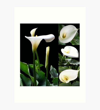 Calla lilies collage III Art Print