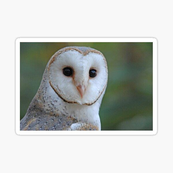 Barn Owl face Sticker