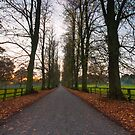 Avenue by Billy Hodgkins