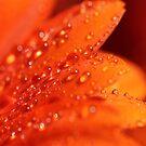 Orange Jewels by KUJO-Photo