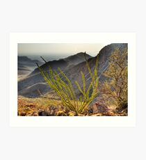 An Ocotillo in the Franklin Mountains Art Print