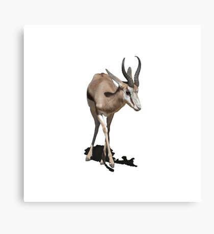 Antelope Baby Canvas Print