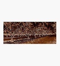 Orchard Sweep Photographic Print