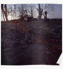 Snowdrops and stone Poster
