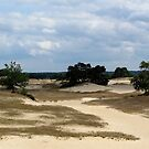 Sand dunes in the Netherlands by Peter Wiggerman