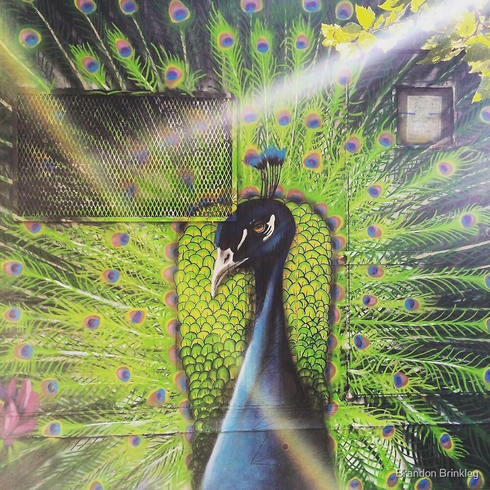 Vibrant Peacock by BrandonBrinkley