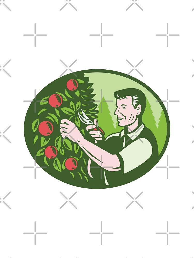 Horticulturist Farmer Pruning Fruit by patrimonio