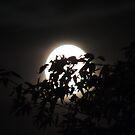 Moon Glow by Coleen Gudbranson