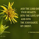 The Lord Direct Your Hearts ~ 2 Thessalonians 3:5 by Robin Clifton