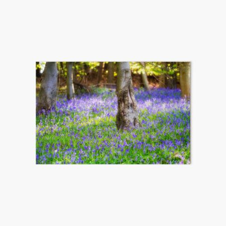 Bluebell Woodland Art Board Print