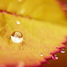 All That Glitters II by iltby