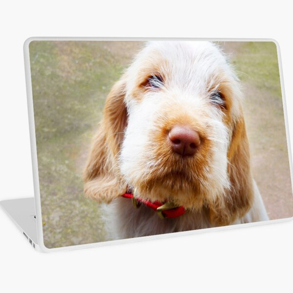 Lifetime of love Spinone Laptop Skin