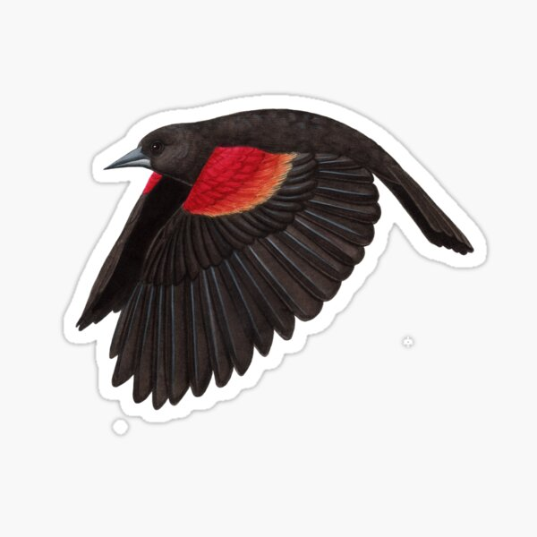 Red-winged Blackbird  Sticker