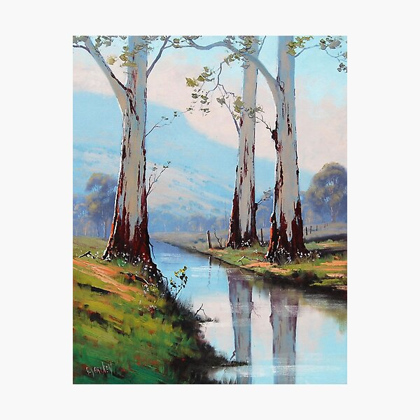 Valley Gums Photographic Print