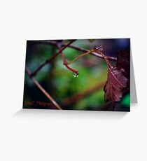 Autumn Teardrop Greeting Card