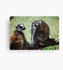 Funny animals Canvas Print