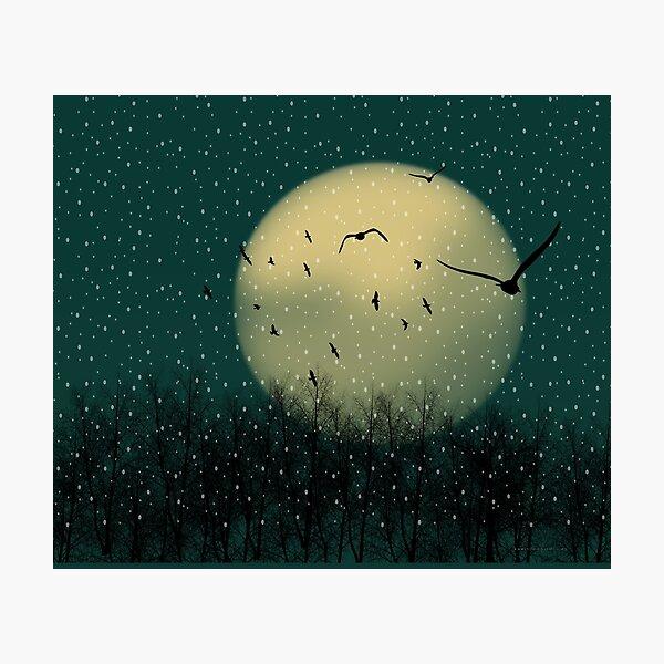 Winter night Photographic Print
