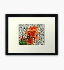 BRIGHT COLOURED LILLY . Framed Print