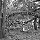 Oak and Resurrection Ferns. Three Lakes W.M.A. by chris kusik