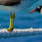 Head to toe...... by shellfish