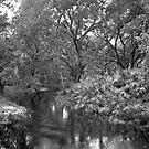 Slough. Three Lakes W.M.A. by chris kusik