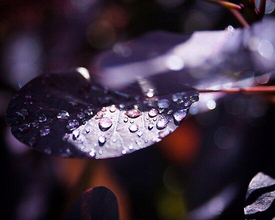 Waterdrops by martijndevalk