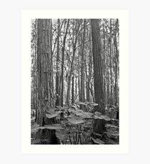 Oak and Caladium. Shingle Creek. Art Print