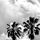 Dos Palms by Andrew Simoni