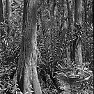 Leather Fern Portrait #2. Shingle Creek. by chris kusik