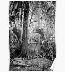 Oak and Palm. Green Swamp W.M.A. Poster