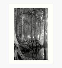 Shoreline. Shingle Creek. Art Print