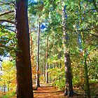 Awesome Autumnal Arboreal Amble.....!!!! by brimel55