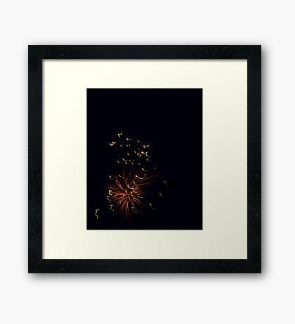 Firework Anemone Framed Print