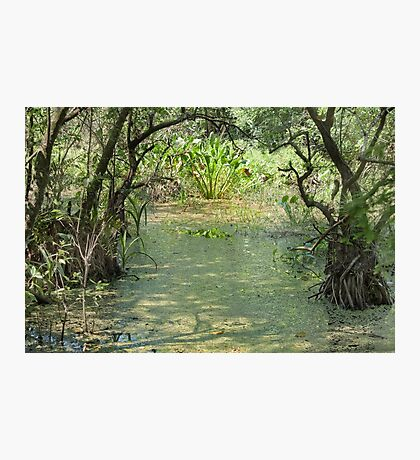 Sometimes You Just get Swamped!  Photographic Print