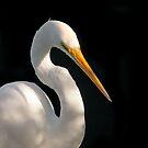 Great Egret Portrait #2. Merritt  Island N.W.R. by chris kusik