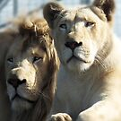 White Lions  by Ron C. Moss