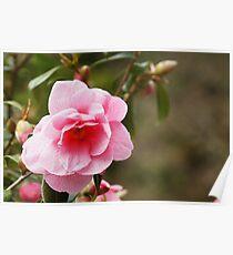 Pink Veined Flower Poster