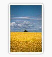 Golden harvest and blue sky Sticker