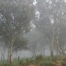 Early Morning Fog by geoffgrattan