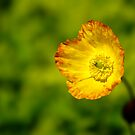 Poppy by Gazart