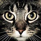 Cat Gaze by Gianni A. Sarcone