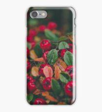 Tiny Winter Berries iPhone Case/Skin