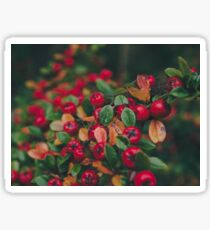 Tiny Winter Berries Sticker