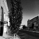 Main Street Tree by © Joe  Beasley IPA