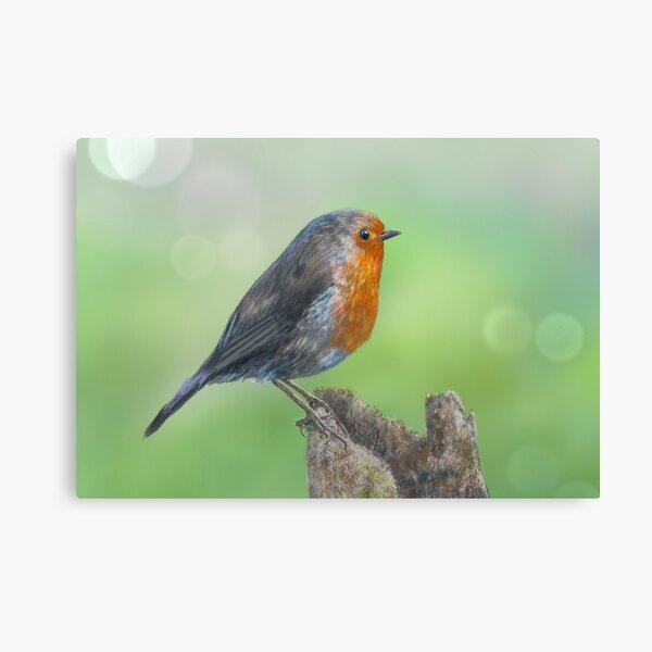 LITTLE ORANGE ROBIN BIRD BOX CANVAS PRINT WALL ART PICTURE