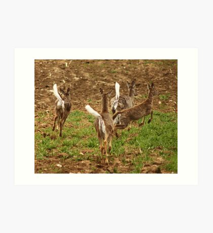 Four Whitetails at Holy Hill Art Print