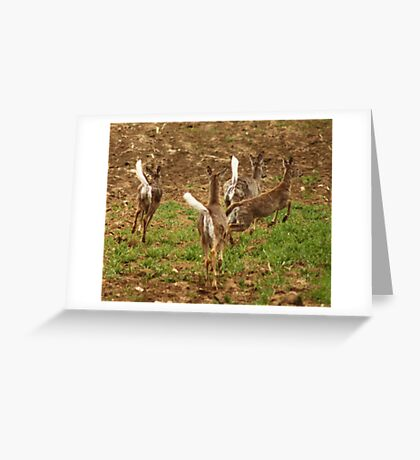 Four Whitetails at Holy Hill Greeting Card