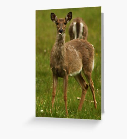 Deer Say's Hello Greeting Card