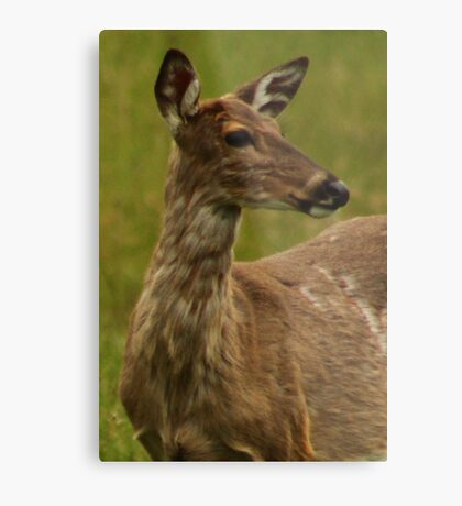 Deer Bust Portrait Metal Print
