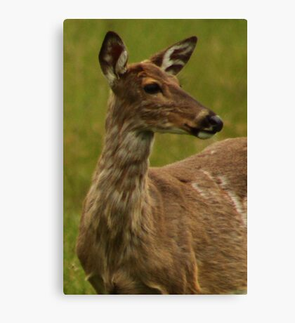 Deer Bust Portrait Canvas Print